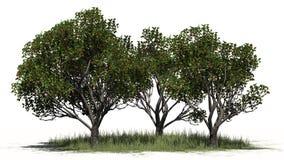 Trois pommiers différent red delicious avec des fruits sur le secteur d'herbe Illustration Stock