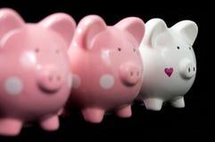 Trois porcs de Litte image libre de droits