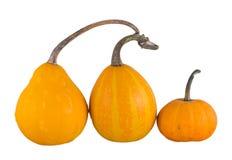 Trois potirons jaunes Photo libre de droits