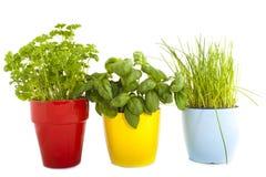 Trois pots d'herbes photographie stock libre de droits