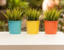 Trois pots de fleurs colorés dans le jardin Images libres de droits