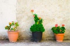 Trois pots de fleurs extérieurs Photos libres de droits