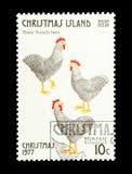 Trois poules françaises Photographie stock libre de droits