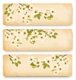Trois rétros bannières de ressort avec du Br de floraison d'arbre Photographie stock libre de droits