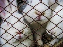 Trois rabits dans une cage Photos stock