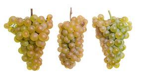 Trois raisins jaunes d'isolement sur un blanc images stock