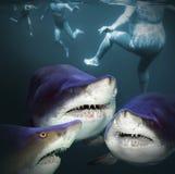 Trois requins ont un amusement Photographie stock libre de droits