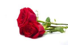 Trois roses Images libres de droits
