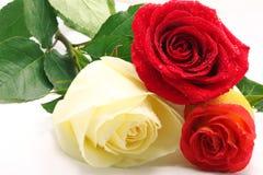 Trois roses Photos stock