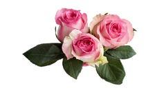 Trois roses roses avec des feuilles d'isolement sur le blanc photographie stock libre de droits