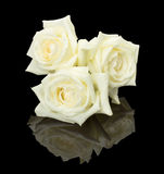 Trois roses blanches de bourgeon sur le fond noir Photo stock