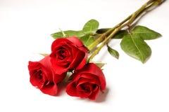 Trois roses d'isolement sur le blanc Photographie stock libre de droits