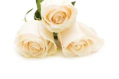 Trois roses d'isolement sur le fond blanc Photographie stock