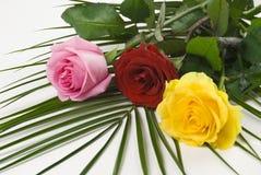 Trois roses de couleurs Photo libre de droits