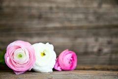 Trois roses et fleurs blanches avec le fond en bois Image stock