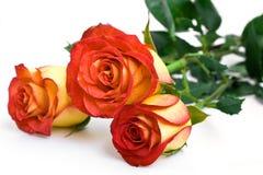 Trois roses jaunes Photographie stock