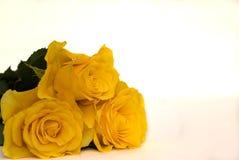 Trois roses jaunes d'isolement photographie stock libre de droits