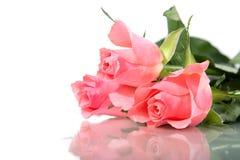 Trois roses roses d'isolement sur le fond blanc Images libres de droits