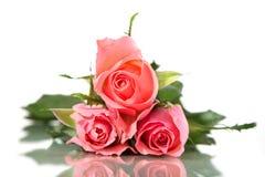 Trois roses roses d'isolement sur le fond blanc Image stock