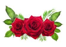 Trois roses rouges avec des feuilles sur le fond blanc Photographie stock
