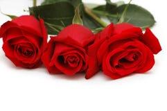 Trois roses rouges d'isolement sur le blanc Image libre de droits