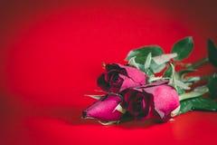 Trois roses rouges, fleurs, Valentine& x27 ; jour de s Photographie stock