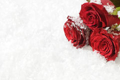 Trois roses rouges sur le fond de neige Images stock