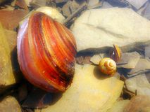 Trois seashells photo stock