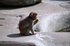 Trois singes dans le zoo photo libre de droits