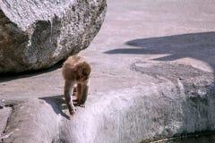Trois singes dans le zoo image libre de droits