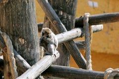 Trois singes dans le zoo photos libres de droits