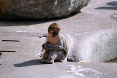 Trois singes dans le zoo photographie stock