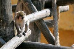 Trois singes dans le zoo photo stock