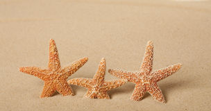 Trois étoiles de mer dans le sable Image stock