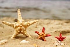 Trois étoiles de mer en plan rapproché de couleur jaune et rouge de différentes tailles se trouvent sur le fond de sable Photo libre de droits
