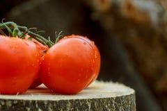 Trois tomates avec des gouttes de l'eau sur le fond en bois Photo libre de droits