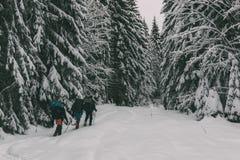 Trois touristes avec sacs à dos dans la forêt neigeuse Image stock