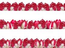 Trois trames différentes avec les tulipes rouge-blanches. Photo libre de droits