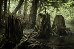 Trois tronçons d'arbre Photographie stock