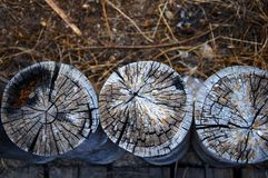 Trois troncs en bois, fond d'herbe sèche photo stock