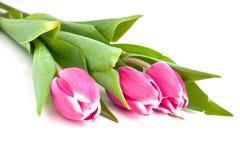 Trois tulipes Images stock