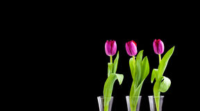 Trois tulipes Images stock