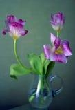 Trois tulipes Photos libres de droits