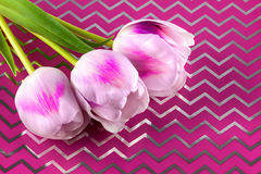 Trois tulipes Photo libre de droits