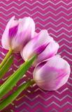Trois tulipes Image libre de droits