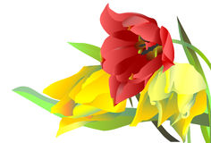 Trois tulipes de fleurs Image libre de droits