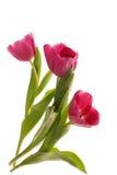 Trois tulipes roses Image libre de droits