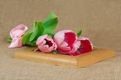 Trois tulipes roses avec le ruban de satin se trouvant sur le cadre Photo stock