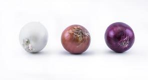 Trois types d'oignons sur un fond blanc - vue de face Images libres de droits