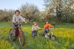 Trois vélos de tour de frères Images libres de droits